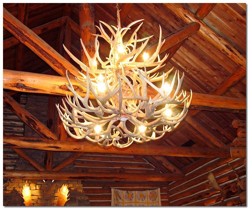Chandeliers Antler - Indoor  Outdoor Lighting - Compare Prices