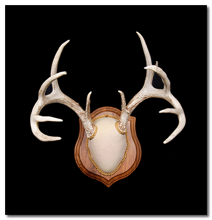 Deer Antler Mounting Kit