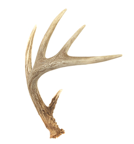 Crafts Using Deer Antlers