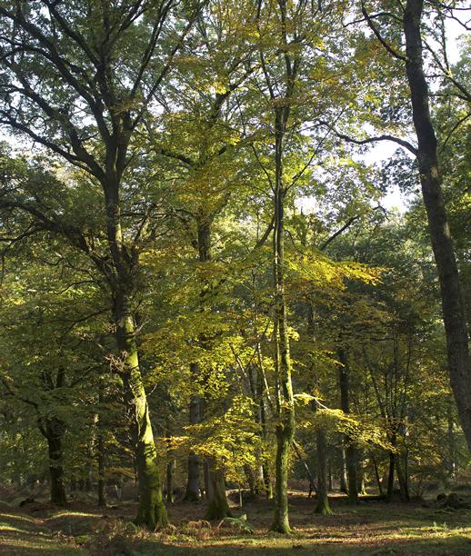 Forest - Whitetail Deer Habitat